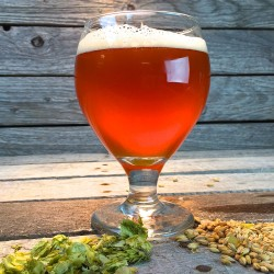 Amarillo IPA - Extract Beer Recipe Kit